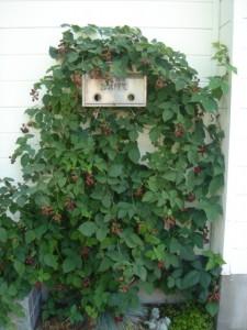 陶芸教室玄関脇